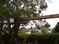 Treehouse Plan : Place the Swing-Set Beam in Between Tree Branches