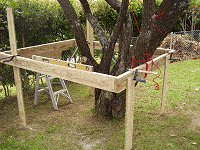 Treehouse Plan : Prop Up the Tree House Floor Frame