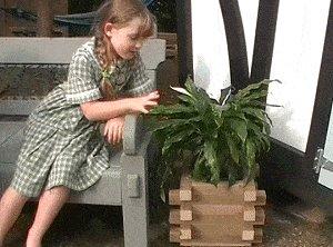 Planter Box Finished