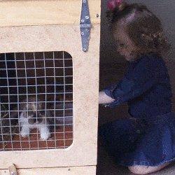 rabbit hutch girl looking at rabbit