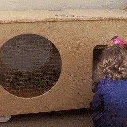 rabbit hutch rabbit and girl at door