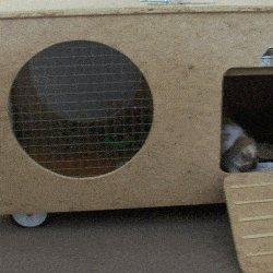 rabbit hutch rabbit at door
