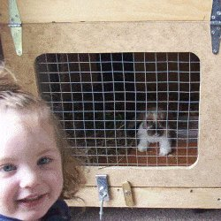rabbit hutch with girl and rabit