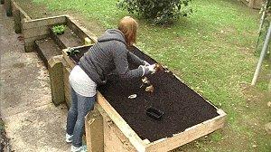 Veggie Box : Begin Planting