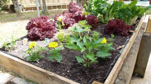 Veggie Box : Later